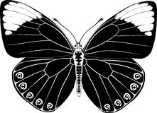μαύρη φαντασία πεταλούδων Στοκ Φωτογραφίες