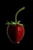 μαύρη φράουλα Στοκ Φωτογραφία