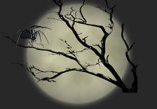 μαύρη χήρα απεικόνισης 2 στοκ φωτογραφίες με δικαίωμα ελεύθερης χρήσης