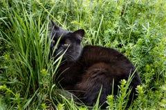 Μαύρη χαλάρωση γατών στη χλόη στοκ εικόνες