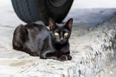 Μαύρη χαλάρωση γατών υπαίθρια στοκ εικόνα με δικαίωμα ελεύθερης χρήσης