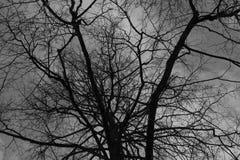 Μαύροι κλάδοι δέντρων κάτω από τον γκρίζο νεφελώδη ουρανό Στοκ Φωτογραφία