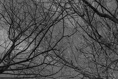 Μαύροι κλάδοι θάμνων κάτω από τον γκρίζο νεφελώδη ουρανό Στοκ Φωτογραφία