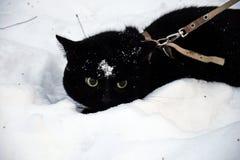 Μαύροι περίπατοι γατών στο χιόνι Στοκ εικόνες με δικαίωμα ελεύθερης χρήσης