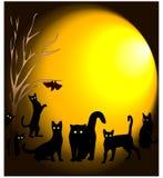 Μαύροι περίπατοι γατών τη νύχτα με τα πλέγματα πετάγματος φεγγαριών απεικόνιση αποθεμάτων