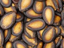 μαύροι σπόροι πεπονιών στοκ εικόνες