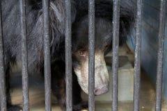 Μαύρος αντέξτε στο κλουβί πίσω από τους φραγμούς χάλυβα Στοκ Φωτογραφίες