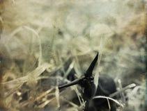 Μαύρος γυμνοσάλιαγκας στη χλόη Στοκ Φωτογραφίες