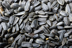 μαύρος ηλίανθος σπόρων αν&alph Στοκ Φωτογραφίες