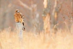 δωρεάν μεγάλο πουλί σωλήνες