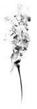 Μαύρος καπνός φαντασίας στο άσπρο υπόβαθρο Στοκ φωτογραφία με δικαίωμα ελεύθερης χρήσης