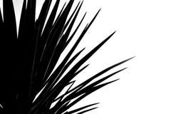 Μαύρος & λευκό - palmtree Στοκ φωτογραφία με δικαίωμα ελεύθερης χρήσης