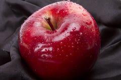 μαύρος μαγικός μήλων Στοκ Εικόνες