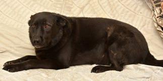 Μαύρος μιγάς δυστυχισμένος σκυλιών Στοκ φωτογραφία με δικαίωμα ελεύθερης χρήσης