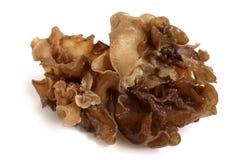 Μαύρος μύκητας στοκ εικόνες