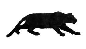Μαύρος πάνθηρας στο λευκό Στοκ Εικόνες