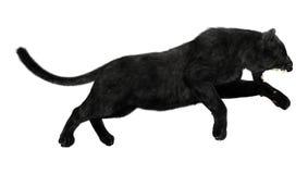 μαύρος πάνθηρας Στοκ εικόνα με δικαίωμα ελεύθερης χρήσης