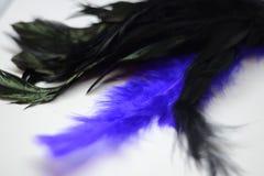 Μαύρος-πορφύρα φτερών Στοκ φωτογραφία με δικαίωμα ελεύθερης χρήσης