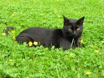 μαύρος πράσινος Στοκ Εικόνες