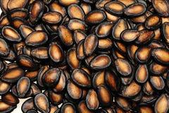 μαύρος σπόρος πεπονιών στοκ φωτογραφία