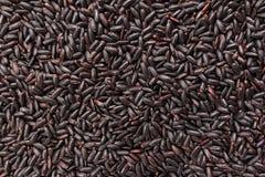 Μαύρος σπόρος ρυζιού Κινηματογράφηση σε πρώτο πλάνο των σιταριών, χρήση υποβάθρου Στοκ φωτογραφία με δικαίωμα ελεύθερης χρήσης