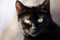 μαύρος στενός επάνω γατών Στοκ Φωτογραφία