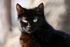 μαύρος στενός επάνω γατών Στοκ εικόνα με δικαίωμα ελεύθερης χρήσης