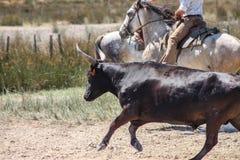 Μαύρος ταύρος Camargue Στοκ φωτογραφία με δικαίωμα ελεύθερης χρήσης