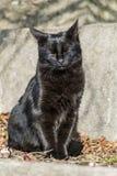 Μαύρος ύπνος γατών υπαίθριος Στοκ εικόνες με δικαίωμα ελεύθερης χρήσης