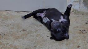 Μαύρος ύπνος σκυλιών κουταβιών στο έδαφος απόθεμα βίντεο