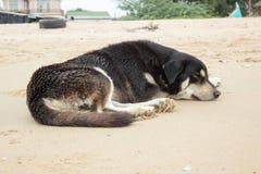 Μαύρος ύπνος σκυλιών στην παραλία Στοκ εικόνα με δικαίωμα ελεύθερης χρήσης