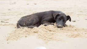 Μαύρος ύπνος σκυλιών στην παραλία Στοκ φωτογραφίες με δικαίωμα ελεύθερης χρήσης