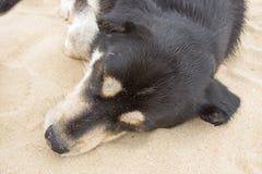 Μαύρος ύπνος σκυλιών στην παραλία Στοκ φωτογραφία με δικαίωμα ελεύθερης χρήσης