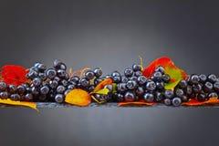 Μαύρος chokeberry με τα φύλλα φθινοπώρου σε ένα σκοτεινό υπόβαθρο Στοκ Φωτογραφίες