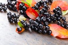Μαύρος chokeberry με τα φύλλα φθινοπώρου Στοκ φωτογραφίες με δικαίωμα ελεύθερης χρήσης
