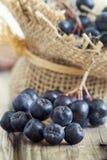 Μαύρος chokeberry μούρων Aronia Στοκ φωτογραφία με δικαίωμα ελεύθερης χρήσης