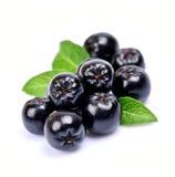 Μαύρος chokeberry στενός επάνω Στοκ Εικόνα