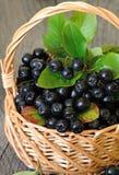 Μαύρος chokeberry στο καλάθι Στοκ εικόνα με δικαίωμα ελεύθερης χρήσης