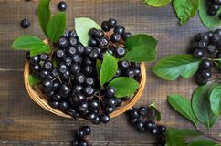 μαύρος chokeberry Στοκ Εικόνες