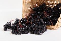 μαύρος chokeberry Στοκ φωτογραφία με δικαίωμα ελεύθερης χρήσης