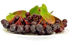 Μαύρος chokeberry (melanocarpa Aronia) Στοκ φωτογραφίες με δικαίωμα ελεύθερης χρήσης