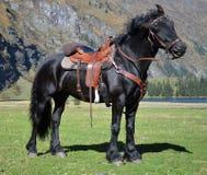 Μαύρο άλογο με τη σέλα με τα βουνά και τη λίμνη στοκ φωτογραφία με δικαίωμα ελεύθερης χρήσης