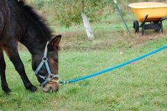 μαύρο άλογο στοκ φωτογραφίες