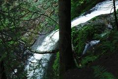 Μαύρο δάσος πεζοπορώ καταρρακτών, Γερμανία Στοκ φωτογραφίες με δικαίωμα ελεύθερης χρήσης
