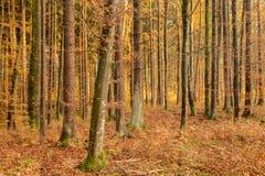 μαύρο δάσος Στοκ εικόνες με δικαίωμα ελεύθερης χρήσης