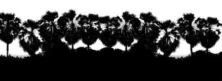 Μαύρο άσπρο υπόβαθρο σκιαγραφιών κλάδων φοινίκων ζάχαρης υπόλοιπου κόσμου χρώματος, ζούγκλα υποβάθρου φοινικών μορφής δέντρων, δέ Στοκ Εικόνες