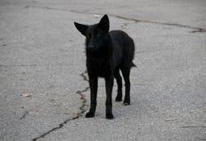Μαύρο άστεγο σκυλί σε ένα πάρκο πόλεων Στοκ φωτογραφία με δικαίωμα ελεύθερης χρήσης