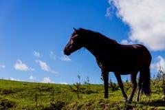 Μαύρο άλογο βουνών Στοκ Εικόνες