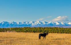 Μαύρο άλογο ενάντια στα βουνά Στοκ Εικόνες