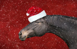 Μαύρο άλογο με το καπέλο Χριστουγέννων στις κόκκινες χιονοπτώσεις υποβάθρου Στοκ εικόνα με δικαίωμα ελεύθερης χρήσης